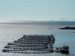 Salmon farming (Lofoten, Norway)